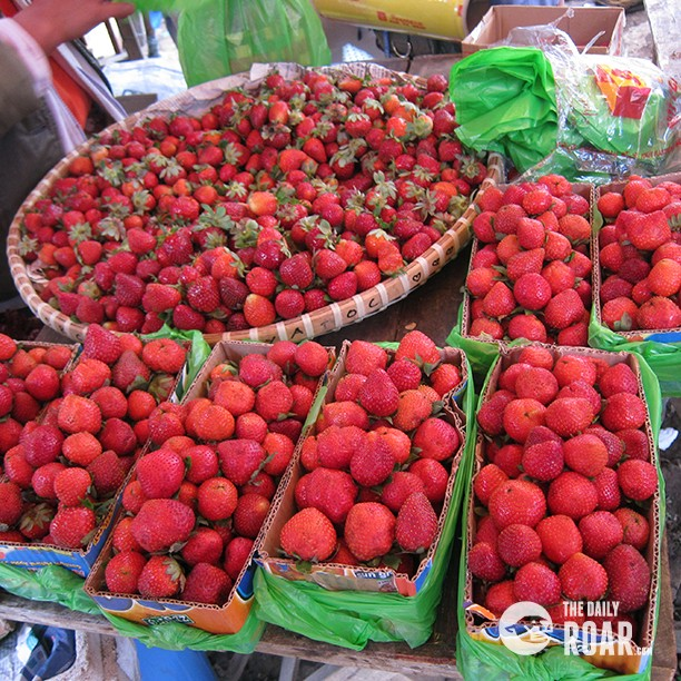 baguio_strawberries