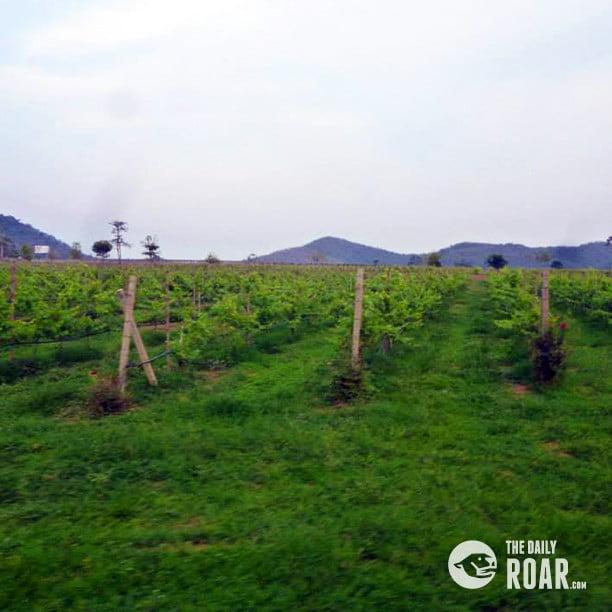 winerypattaya3